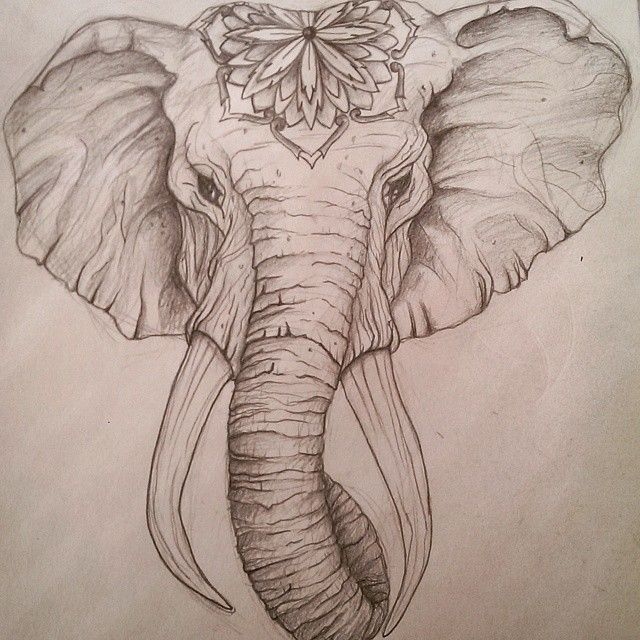 Sketch of the day #elephant #headress #tattoo #tattoodesign #tattooapprentice #drawing #sketching