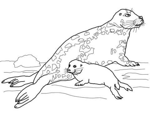 Kleurplaten Zeehond.Afbeeldingsresultaat Voor Kleurplaten Zeehond Kleurplaten