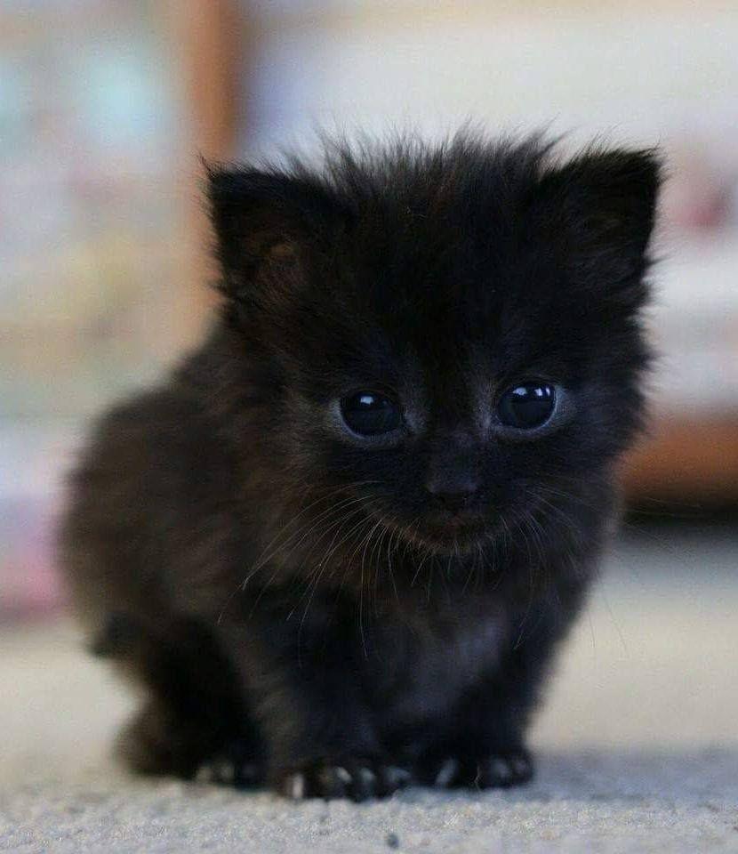 Pin By Cherry Lala ƴᘮ On ɱɣ ʄɑvoɽiʈe ɑɳiɱɑɭs Cute Animals Cute Baby Animals Kittens Cutest