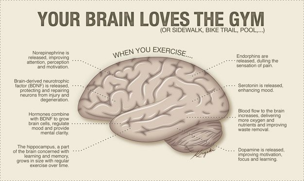 Exercise Can Help Increase Size Of The Brain's Hippocampus in 2020   Brain  gym, Benefits of exercise, Brain exercise