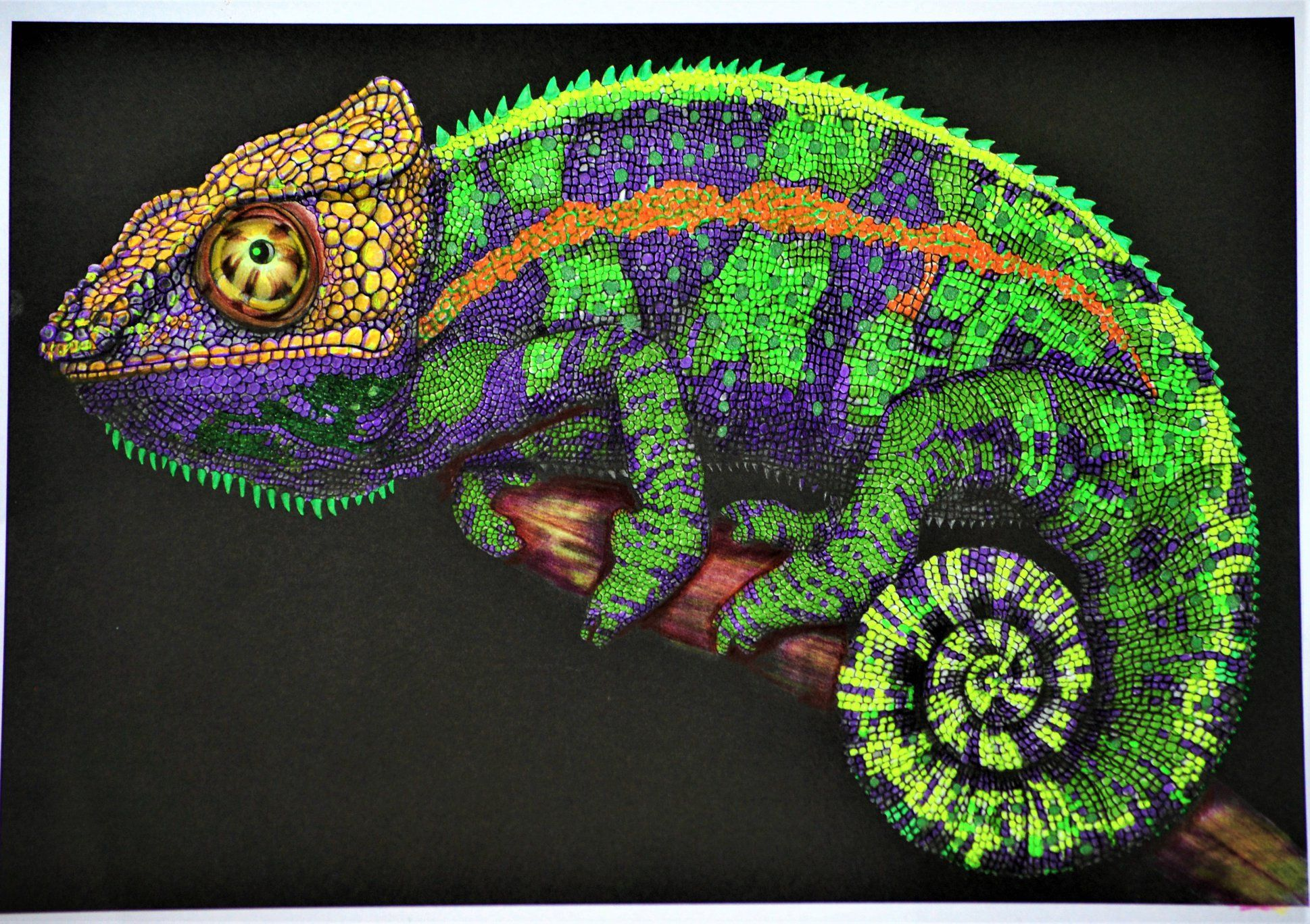 Coloring Page Of Chameleon Lizard Colorless And Color Samples For