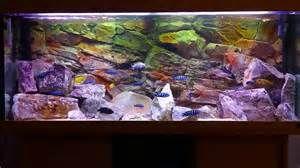 african cichlids tank - Bing images