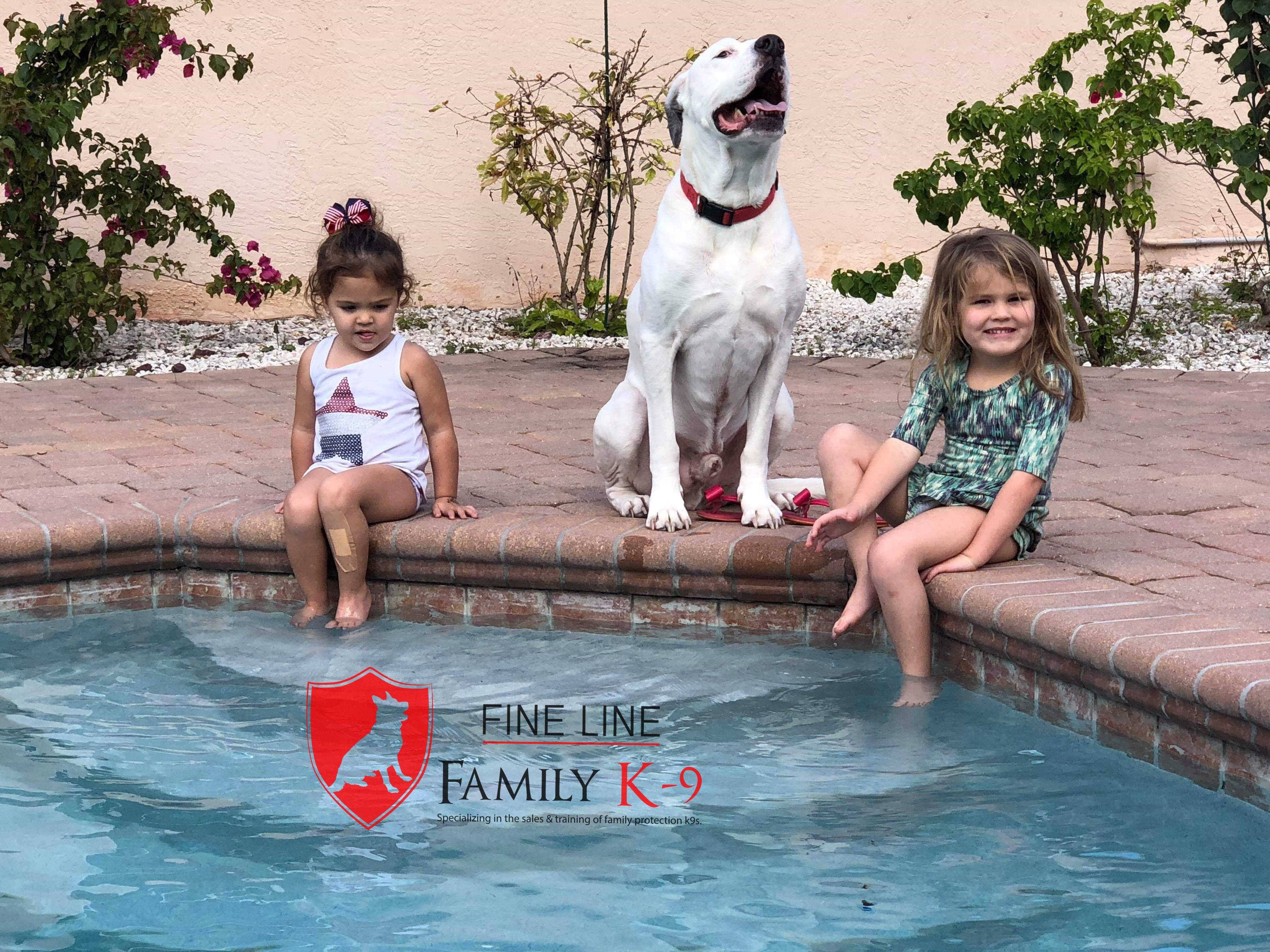 Bodie sold forsale dogforsale forsaledog