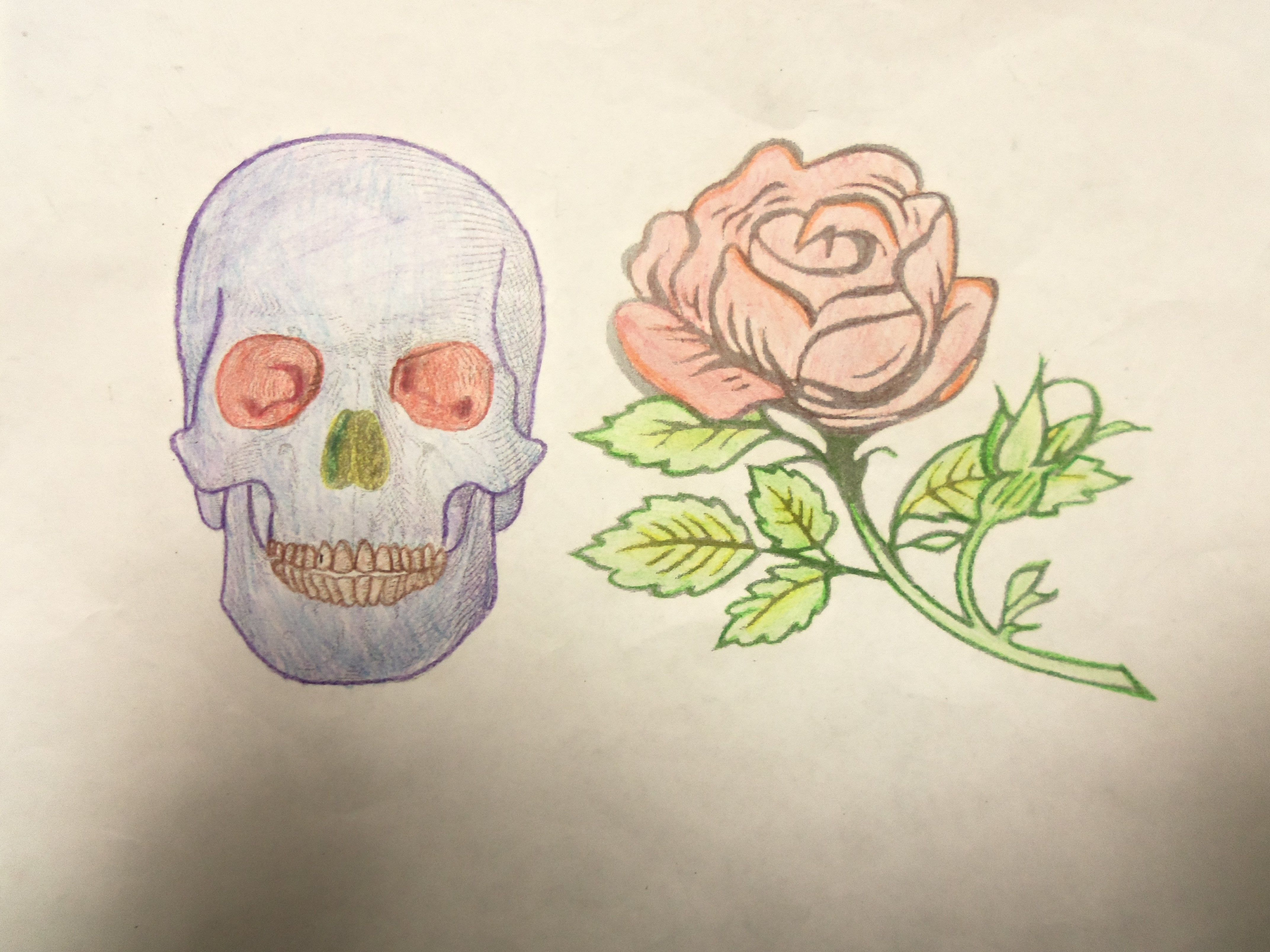 This Is An Image Of A Skull And Rose That I Colored Using The Technique
