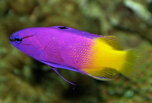 Pics of tropical fish best chicago aquariums fish and for Exotic tropical fish