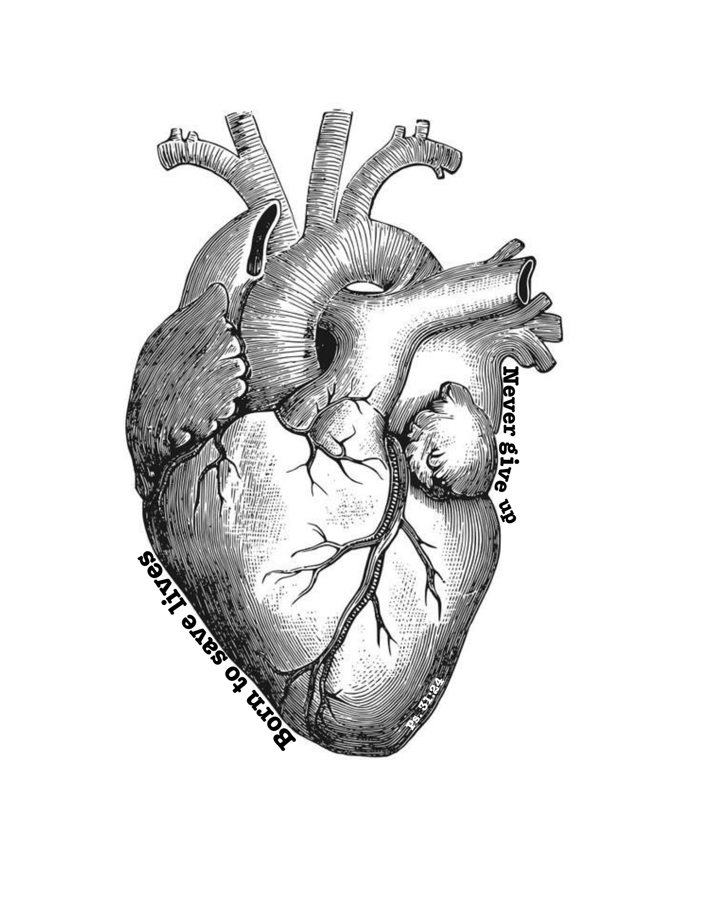 Heart Drawing Student Anatomical Heart Tattoo Anatomical Heart Drawing Heart Drawing