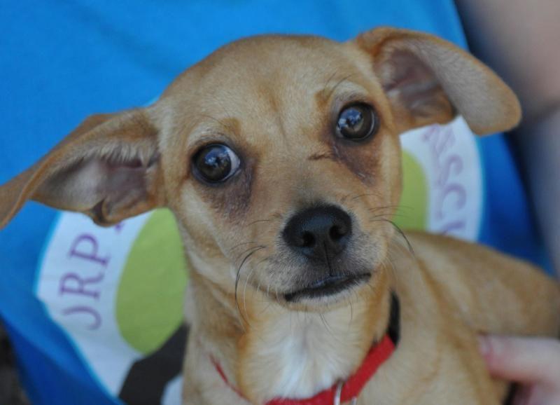 Puppy adoption atlanta ga