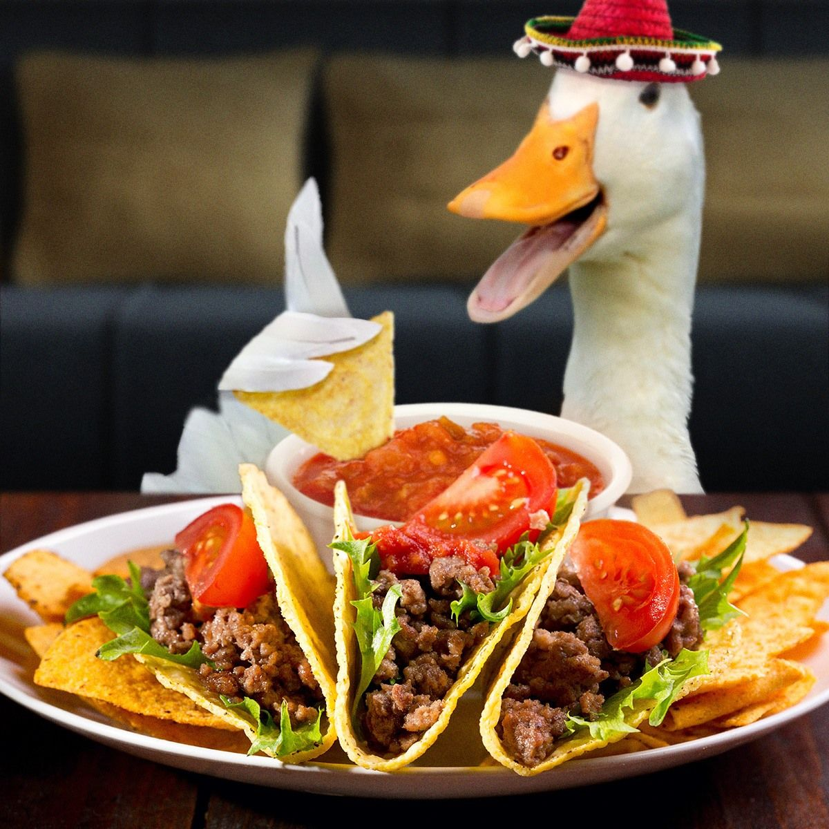 Image result for mexican geese funny