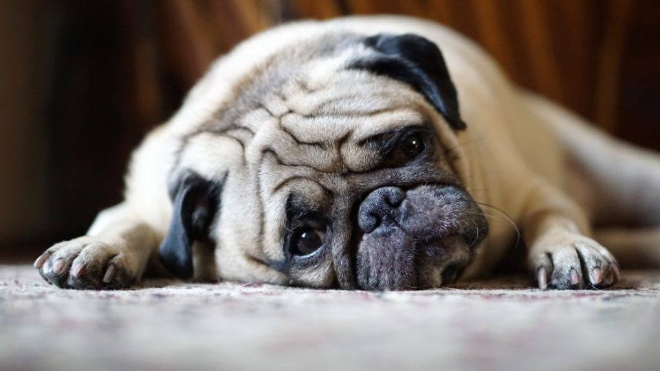 7 Surprising Ways Your Dog Says I M Stressed Cat Illnesses Dog Insurance Pet Insurance Reviews