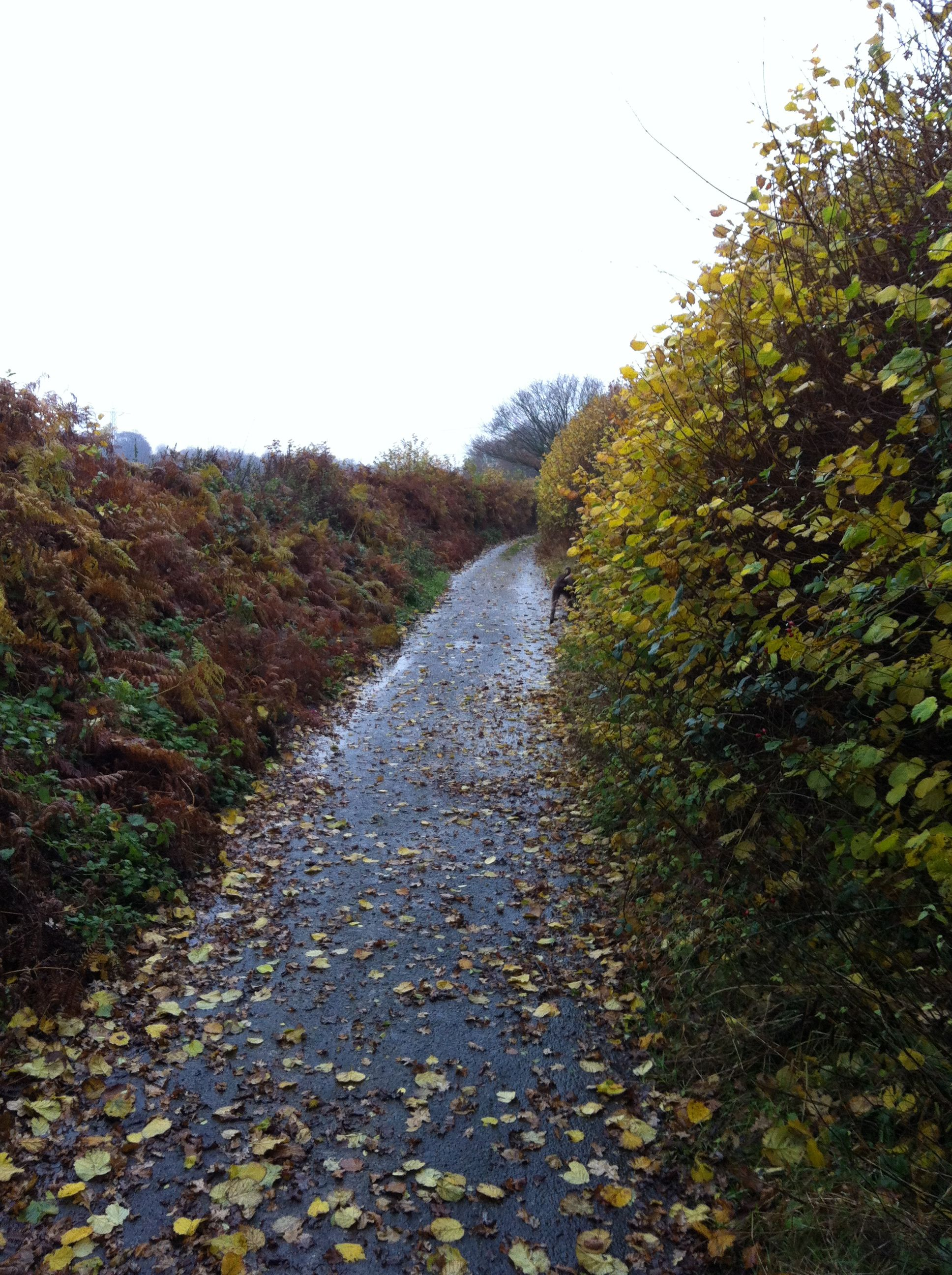 Beamond End Lane (With images) Country roads, Photo, Outdoor