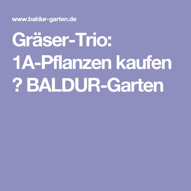 Gräser-Trio: 1A-Pflanzen kaufen  BALDUR-Garten | vor dem Haus ...