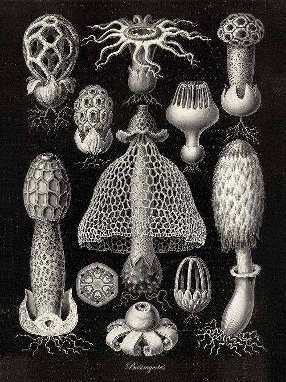 Hey, I found this really awesome Etsy listing at https://www.etsy.com/listing/162154308/mushroom-art-victorian-art-print-poster