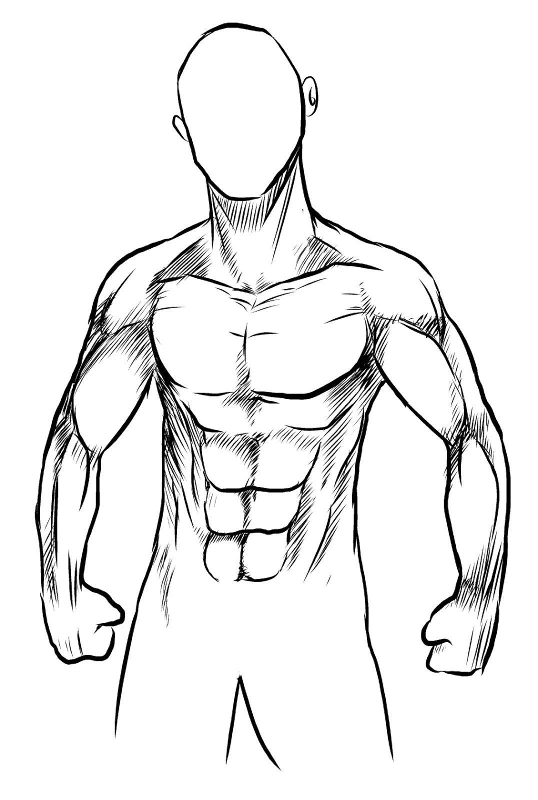 musculos dibujo - Buscar con Google | Cuerpo Humano | Pinterest ...