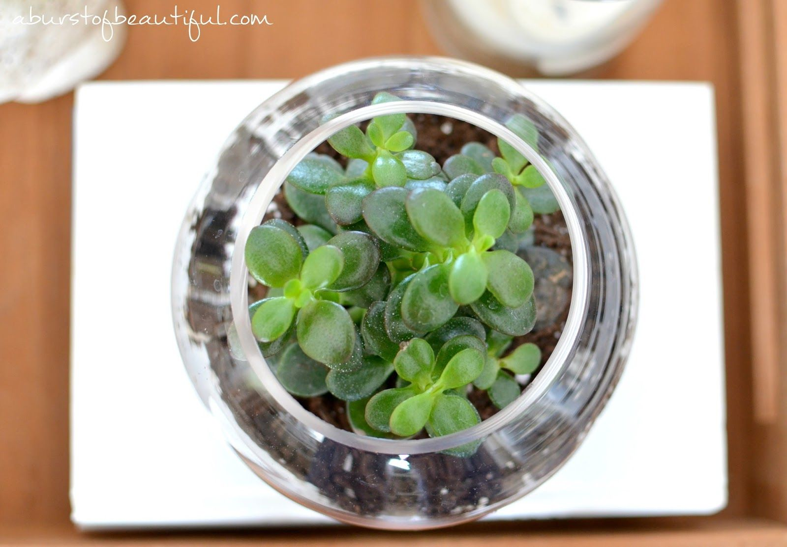 Easy diy succulent gardens succulents terraria and easy diy