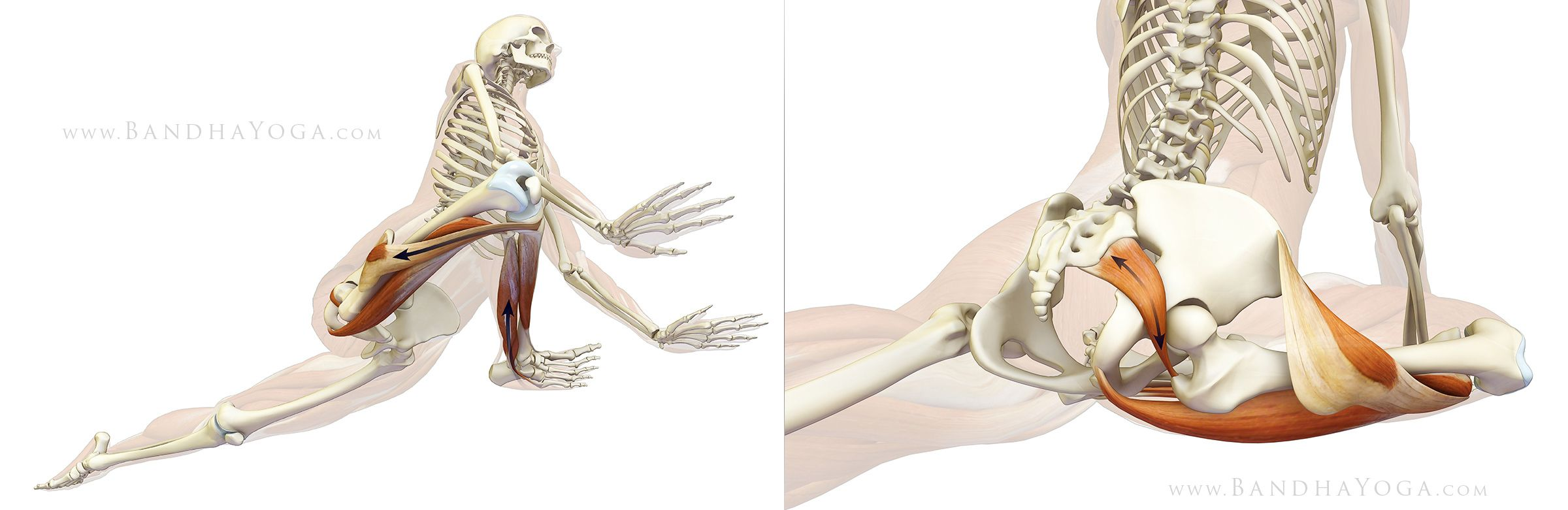 The Daily Bandha: Protecting Your Knee in Pigeon Pose | Body Works ...
