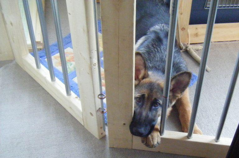 安上がりな自作diyフェンス 大型犬と室内で暮らす 犬小屋 Diy 犬小屋 犬のケージアイデア