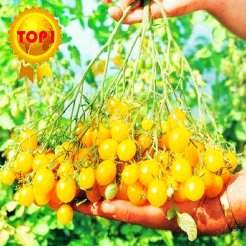 1bag=hot sale 300pcs sweet Tomato Seeds cherry mini yellow vegetables seed fruit seeds bonsai potted plants home & garden