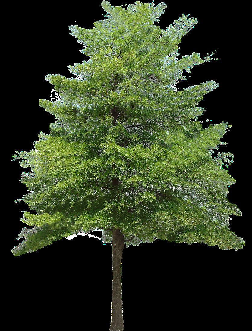 Png transparent texture recherche google png herbe et for Short trees