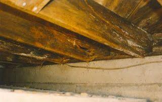 American Basement Solutions How To Fix And Repair Floor Joist Rot Repair Floors Flooring Attic Remodel