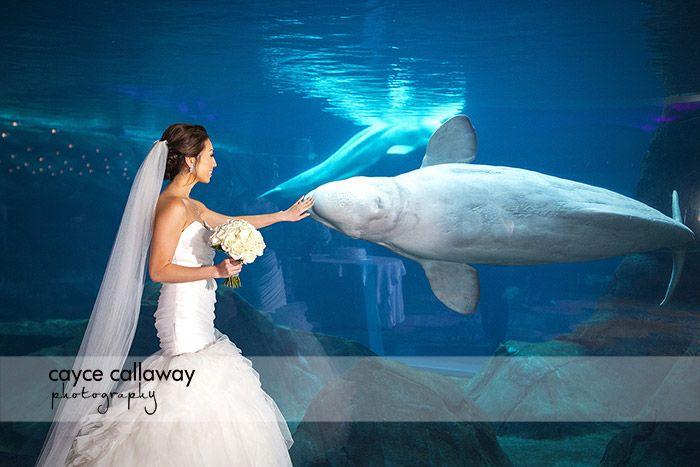 Crystal And David S Fall Wedding At The Georgia Aquarium