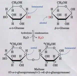 A disaccharide is formed from two monosaccharides
