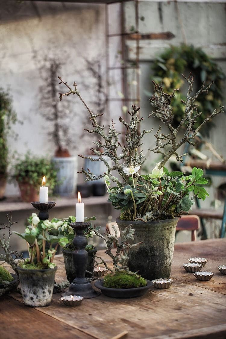 Garden-Potted Plants #xmastabledecorations