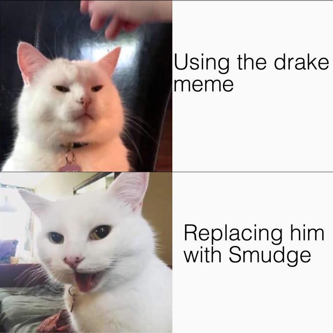 Smudge The Cat Funny Cat Memes Funny Cat Jokes Cat Memes