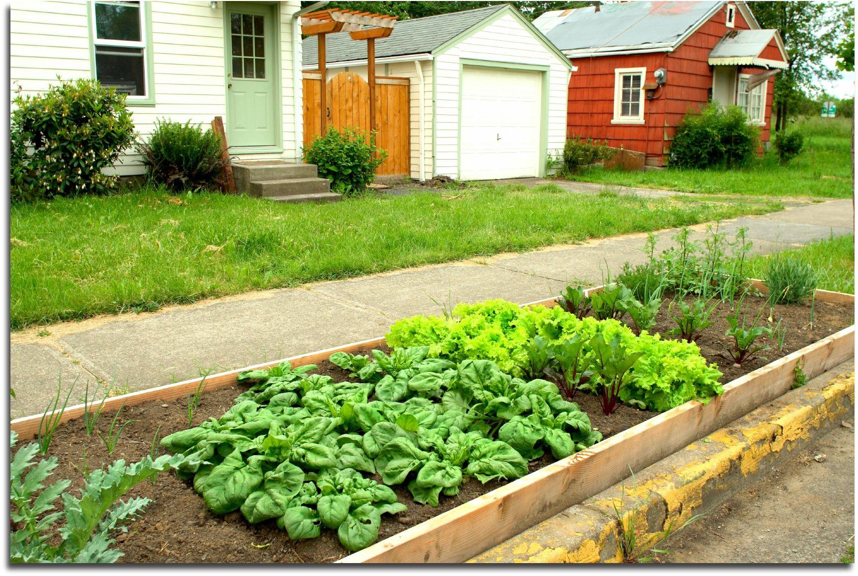 Formidable Backyard Vegetable Garden Ideas