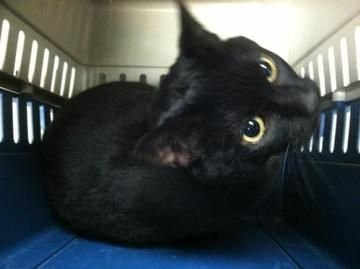 Check Out A512568 S Profile On Allpaws Com And Help Her Get Adopted A512568 Is An Adorable Cat That Needs A New Home Https Www Cat Adoption Cute Cats Cats