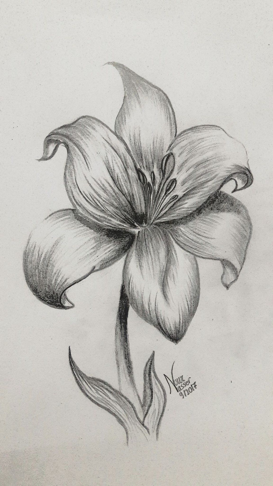 Pencil drawing Lily Pencil drawings of flowers, Lilies