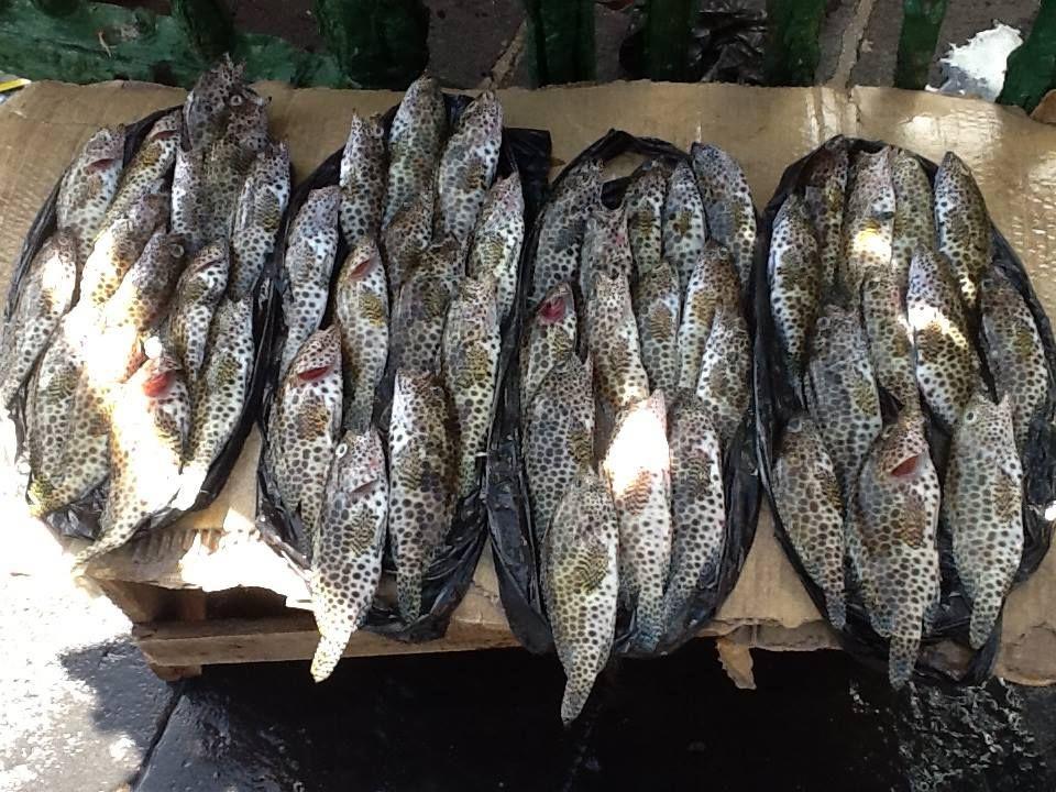 Fish for sale at Port Louis market,Mauritius.