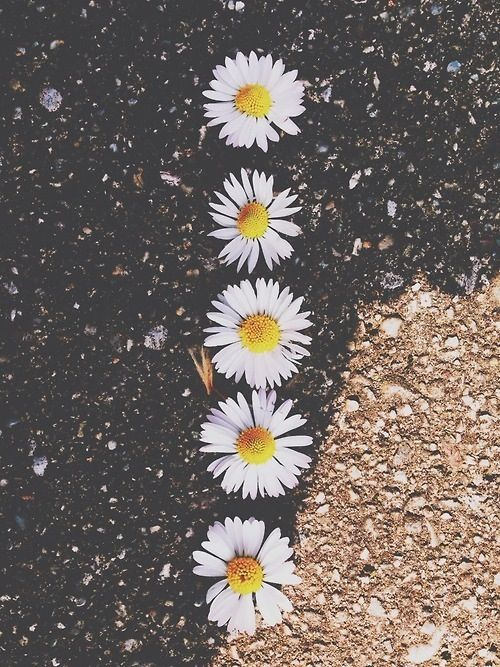 Photography Tumblr Vintage Grunge Flowers Sunshine Daisy Spring