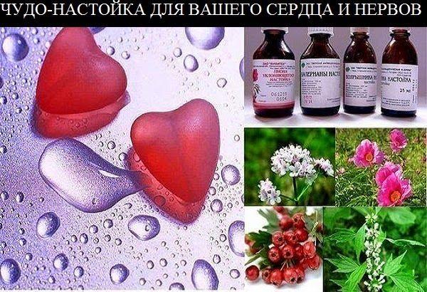 чудо-настойка для вашего сердца и нервов