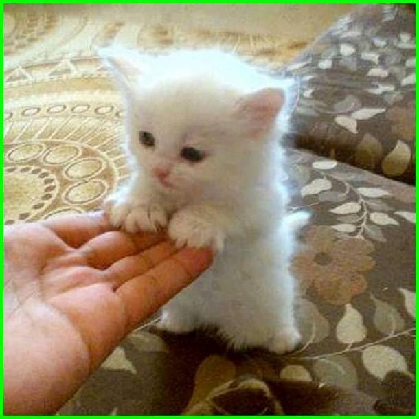 Gambar Kucing Lucu Imut Dan Paling Menggemaskan Sedunia Dunia Fauna Hewan Binatang Tumbuhan Di 2020 Gambar Kucing Lucu Bayi Hewan Kucing Lucu