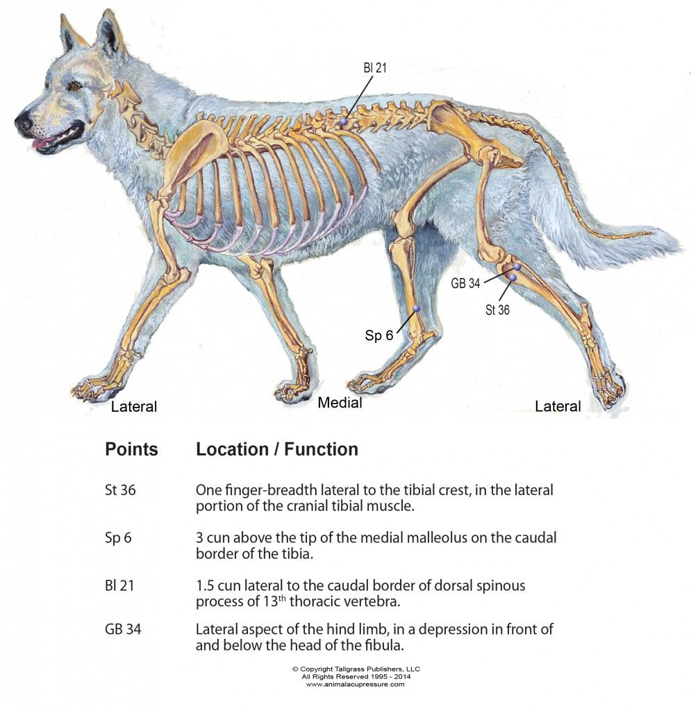 Acupressure Canine for CCL Injuries   Animal Health & Care   Pinterest