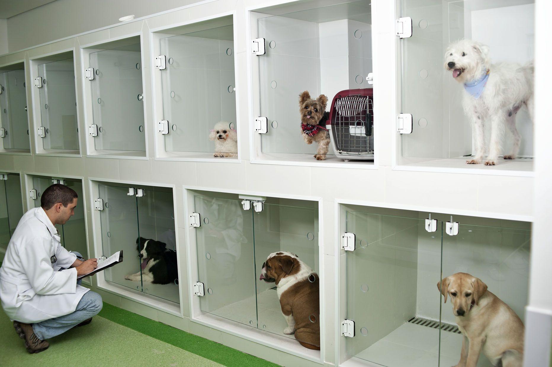 Hospital Veterinario Projeto Pesquisa Google Clinica