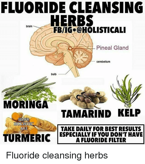 Infos : Eye Health Cleanses and FLUORIDE CLEANSING HERBS Braln FBRIIGa@HOLISTICALI Pineal Gland Cerebellum Bulb MORINGA TAMARIND KELP IGEB TAKE DAILY FOR BEST RESULTS ALI TURMERIC Fluoride Cleansing Herbs | Ali Meme on ME.ME Ali, Memes, and Best: FLUORIDE CLEANSING HERBS braln FBRIIGa@HOLISTICALI Pineal Gland cerebellum bulb MORINGA TAMARIND KELP IGEB TAKE DAILY FOR BEST RESULTS ALI TURMERICFluoride cleansing herbs