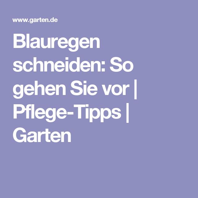 Blauregen Schneiden: So Gehen Sie Vor | Pflege-tipps | Garten ... Garten Im November Tipps Pflege