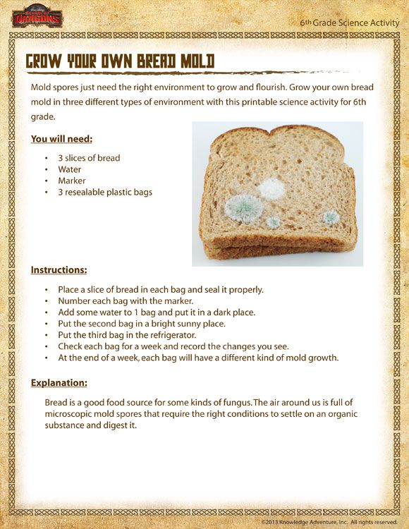 Grow Your Own Bread Mold Printable Science Activities With