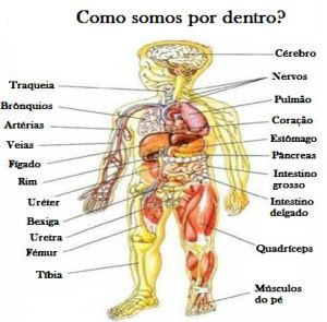 Queres Saber Como E O Teu Corpo Por Dentro Aprende O Vocabulario Partes Do Corpo Humano Corpo Humano Partes Do Corpo