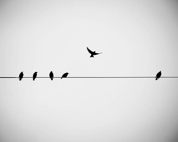 Large Photography Print Birds On A Wire Black And White - Minimalistic black white photo series captures energetic movements mid air