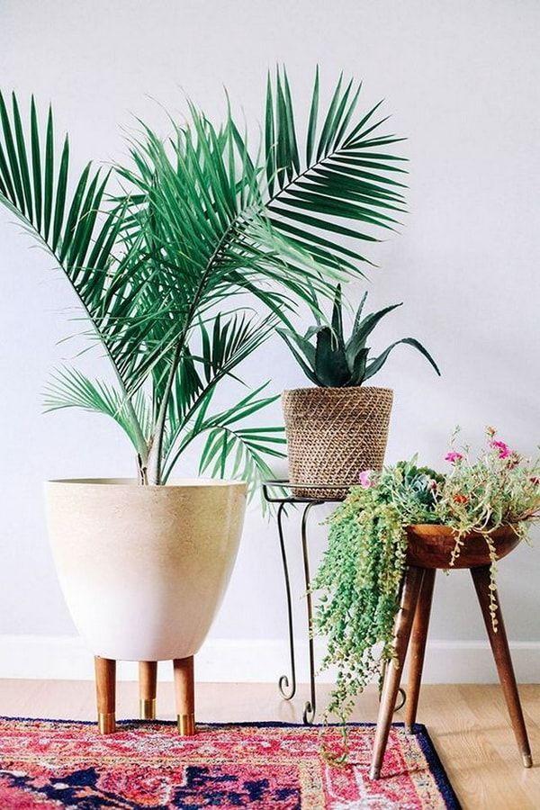 Palma de Bambú Plantas de interior Plantas para decorar interiores - decoracion de interiores con plantas