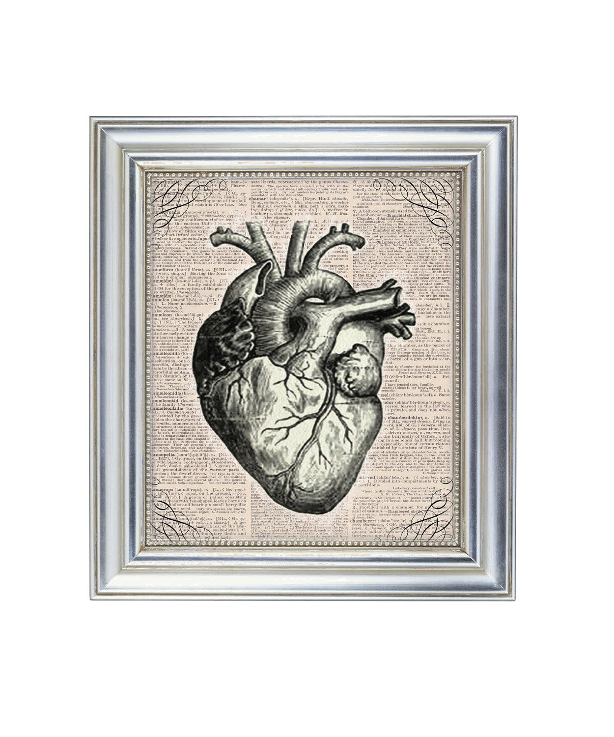 The Tell Tale Heart Antique Heart Anatomical Illustration