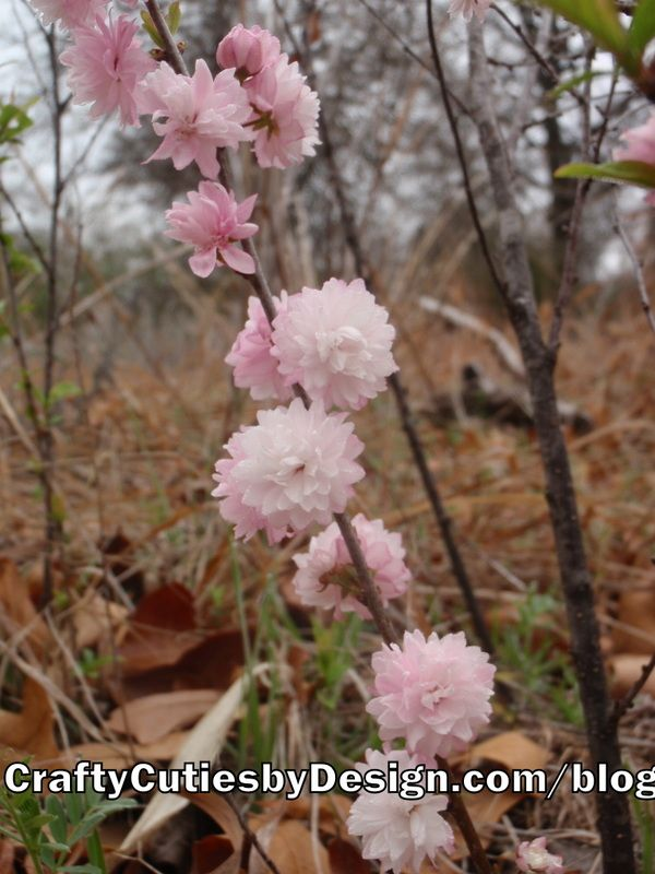 Pink flowering almond bush blooms flower gardening pinterest pink flowering almond bush blooms mightylinksfo