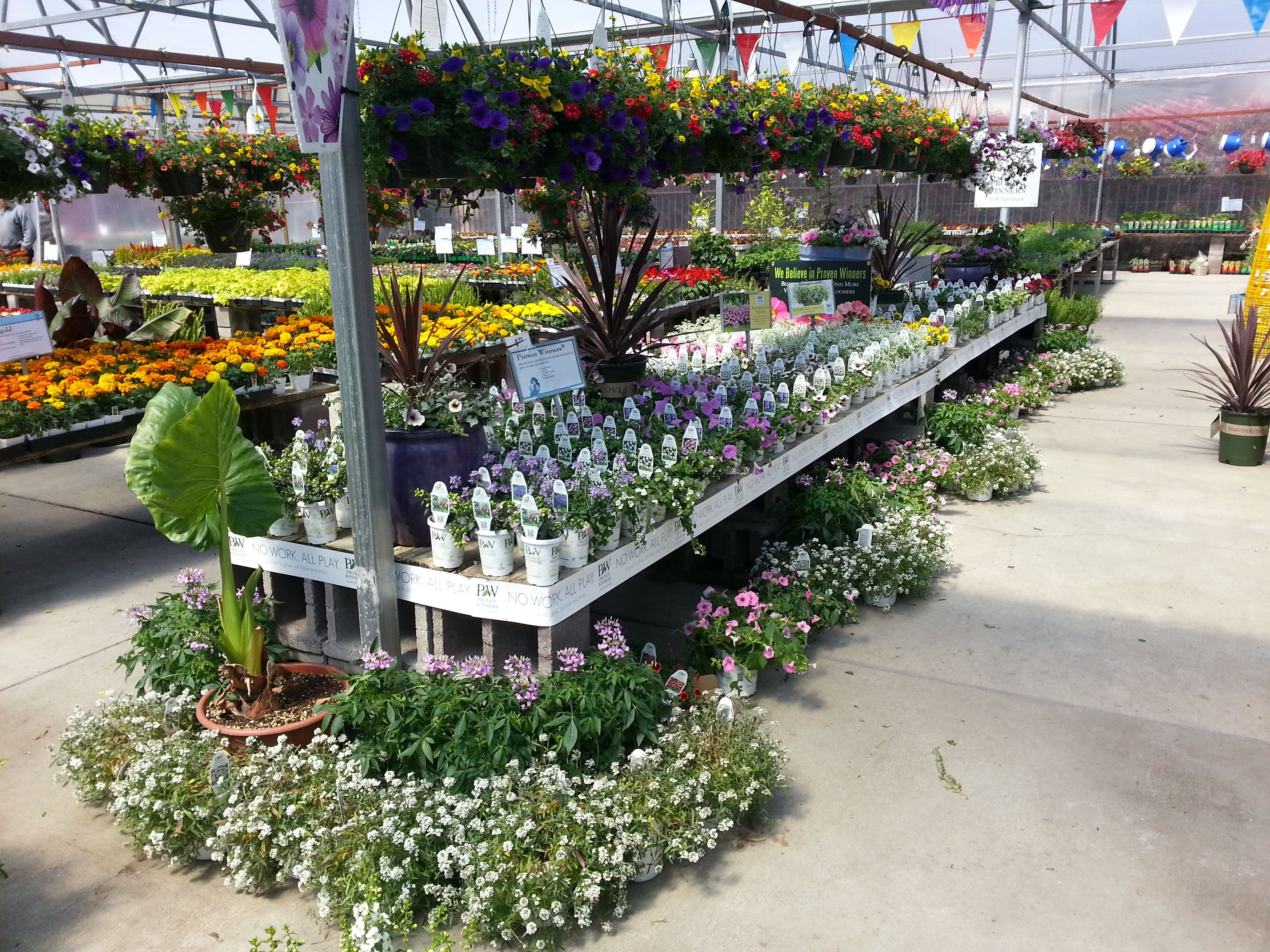Proven Winners at Calloway's Nursery in Plano on Custer
