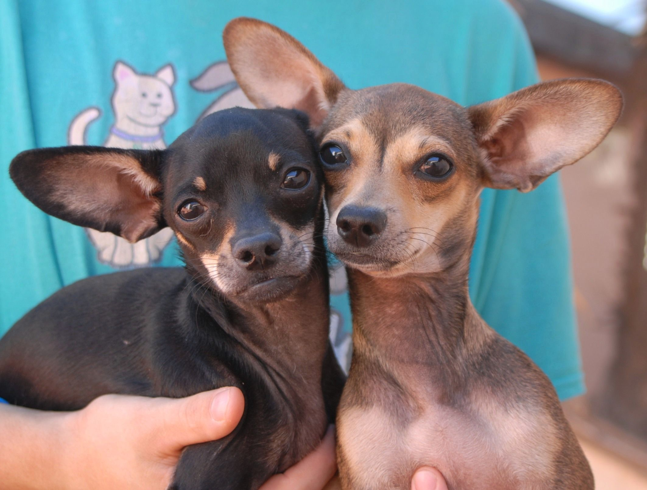 Pin by Nevada SPCA on Nevada SPCA rescued animals Dogs