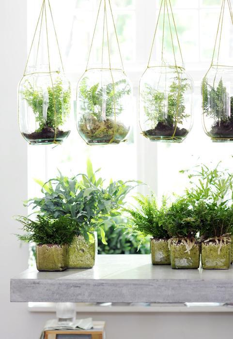 Galeria Zdjec Jak Eksponowac Kwiaty Doniczkowe W Domu Zdjecie Nr 7 Urzadzamy Pl Air Plants Decor Hanging Plants Diy Plants