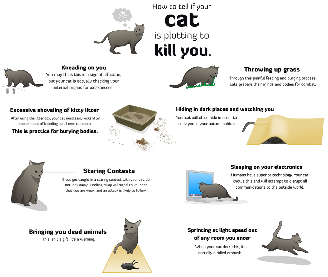 How to know if your Cat is plotting to kill you