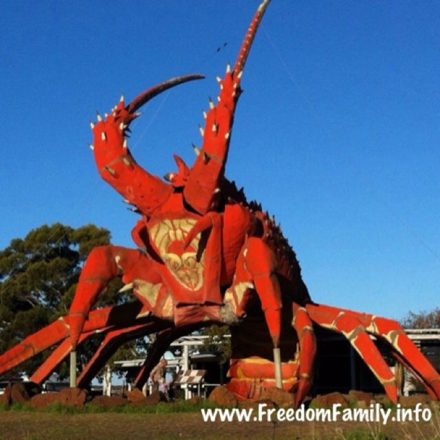 The Big Lobster in South Australia!