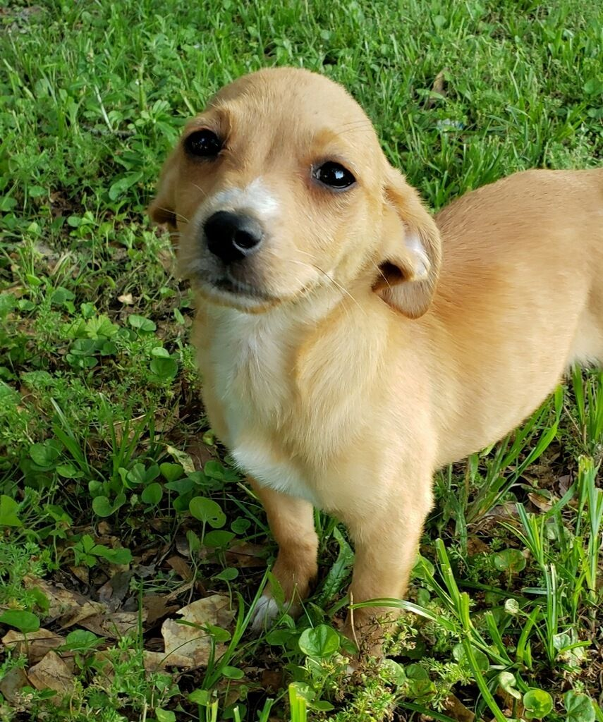 Adopt rose local may 23 on petfinder in 2020 help